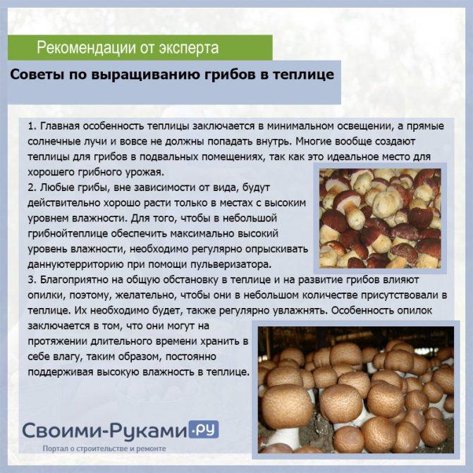 Гриб белянка: характеристика и особенности приготовления