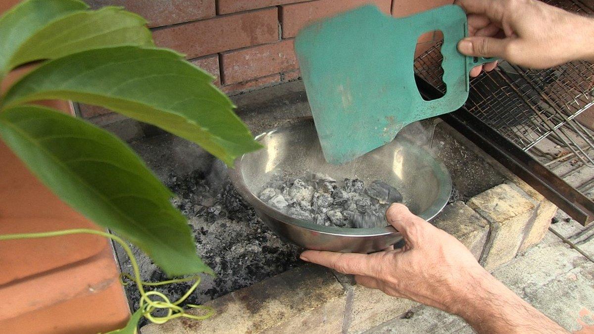 Древесная зола как удобрение для огорода, для каких растений подходит