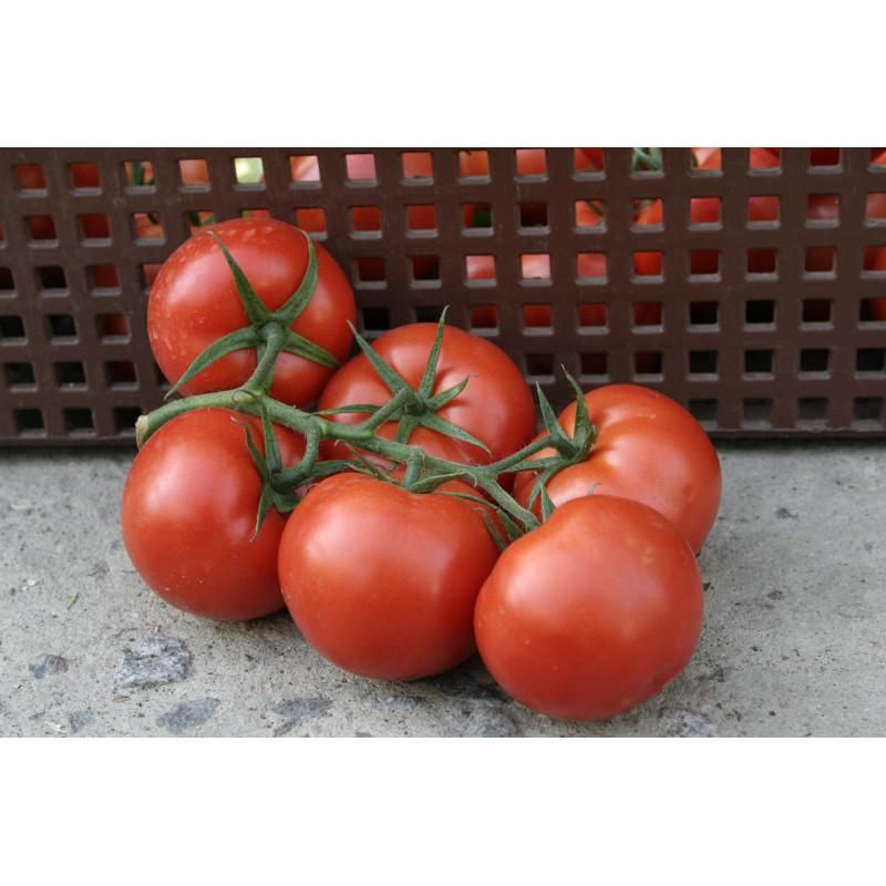 Томат янтарное сердце f1: отзывы об урожайности, характеристика и описание сорта, фото помидоров