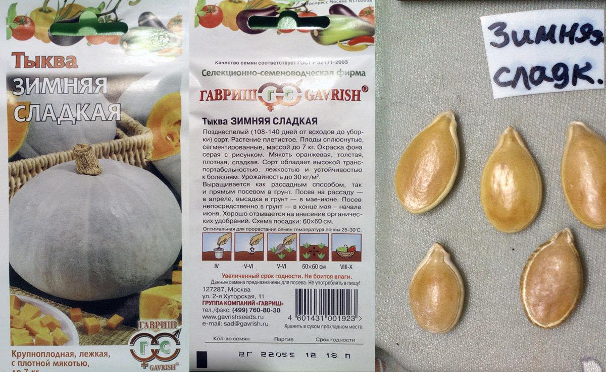 Лучшие сорта тыквы для открытого грунта. описание