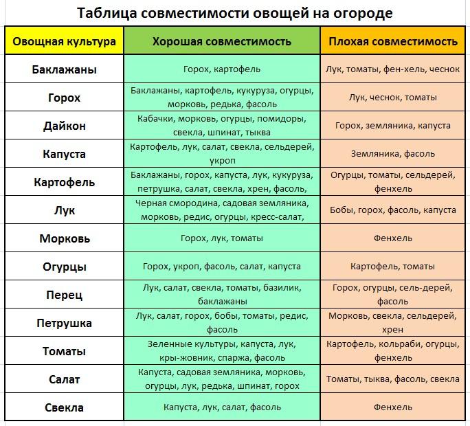 Что можно посадить в теплице вместе с помидорами: совместимость с другими культурами