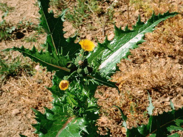 Минеральные удобрения: польза и вред