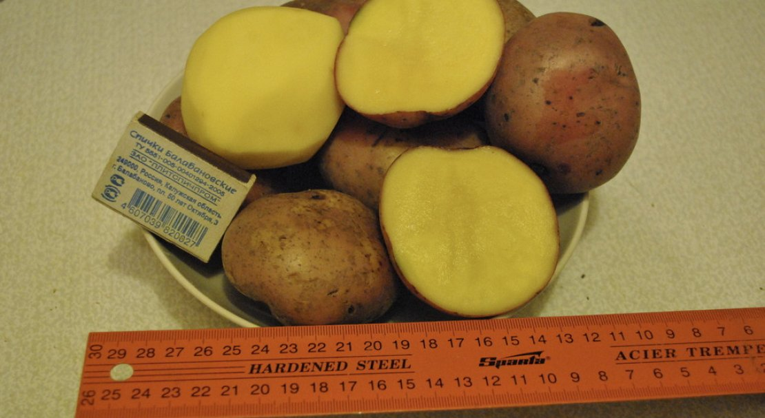 Картофель скарлет: описание сорта, фото, отзывы, особенности посадки и уход