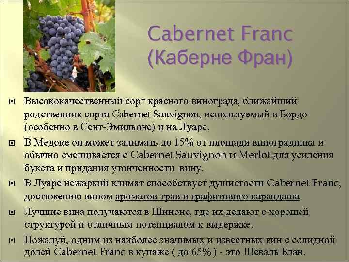 """Виноград темпранильо: описание сорта, фото и отзывы садоводов - журнал """"совхозик"""""""