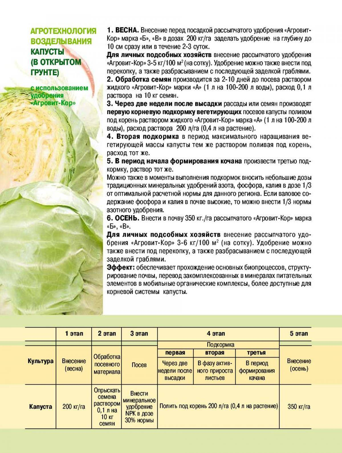 Зола: правила подкормки растений