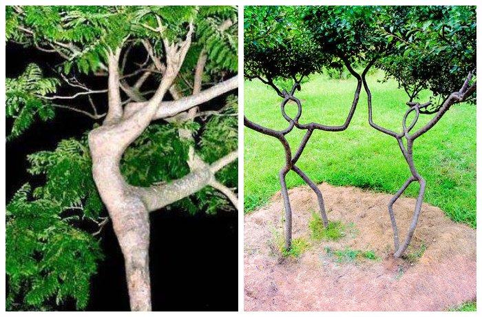 Арбоскульптура в ландшафтном дизайне