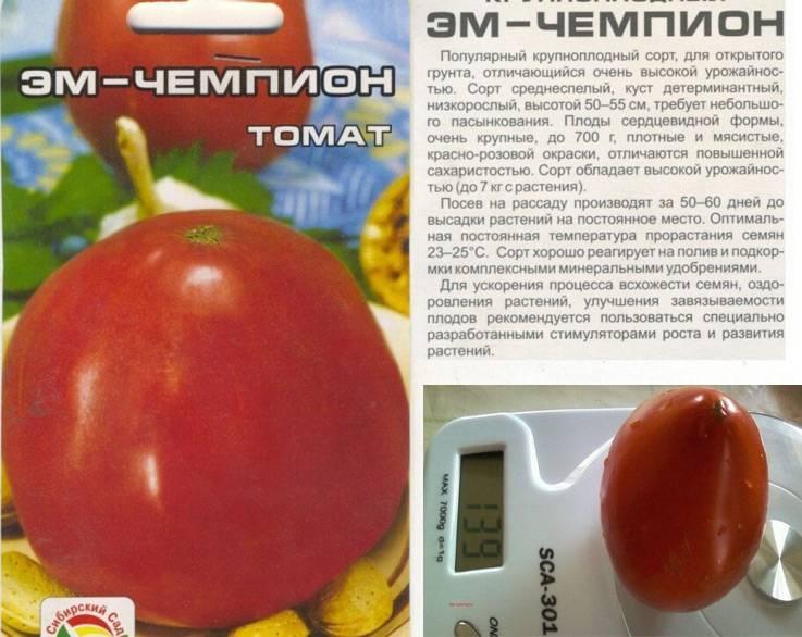 10 сортов и гибридов крупноплодных томатов-рекордсменов
