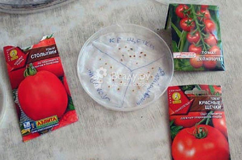 Замачивание семян томатов перед посевом – на рассаду, нужно ли замачивать, на сколько, как правильно