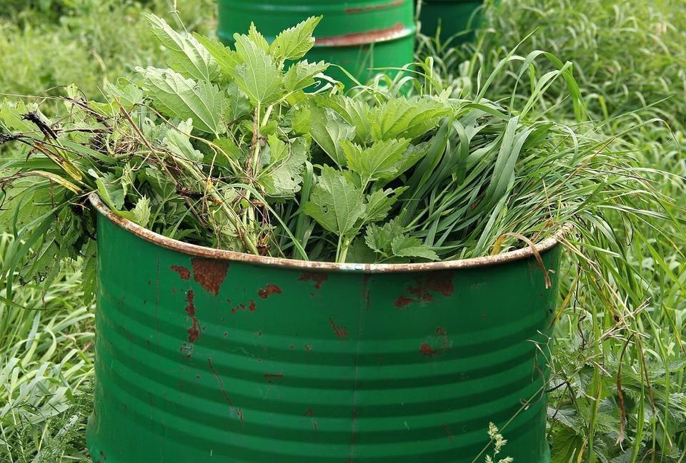 Польза растений сорняков в огороде. рецепты удобрения из сорняков. обработка огорода настоями из трав