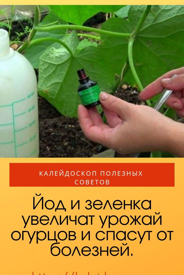 Как подкормить огурцы зеленкой и йодом: обработка, удобрение