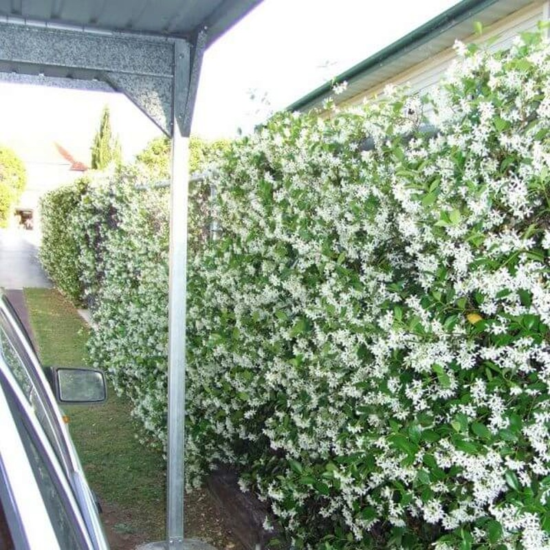 Живая изгородь на даче, виды и уход - фото примеров