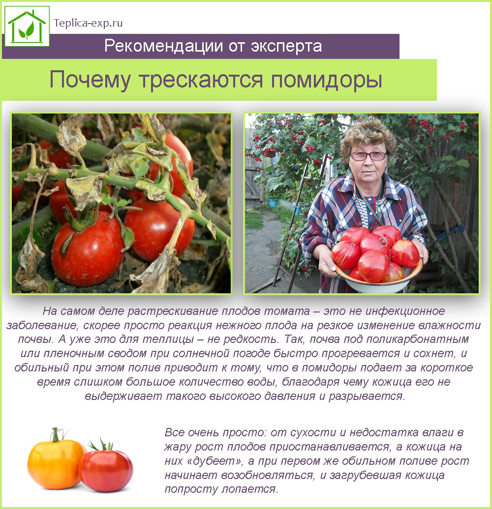 Причины, почему помидоры трескаются при созревании в теплице и лечение