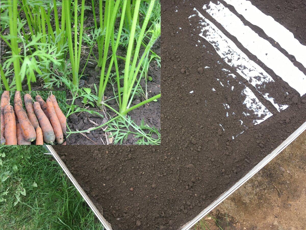 Пошаговая инструкция: как сажать морковь семенами в открытом грунте, чтобы не прореживать