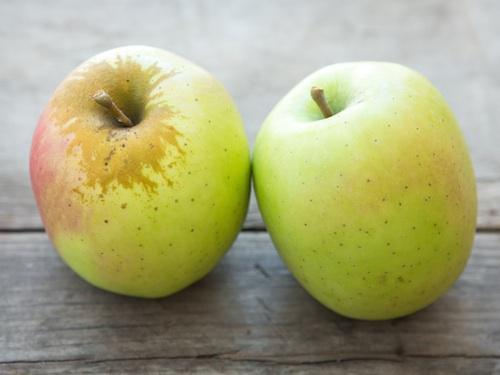 Знаменитая яблоня фуджи: отзывы, описание, фото