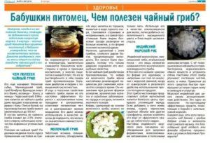 Молочный гриб: как ухаживать за ним и как употреблять