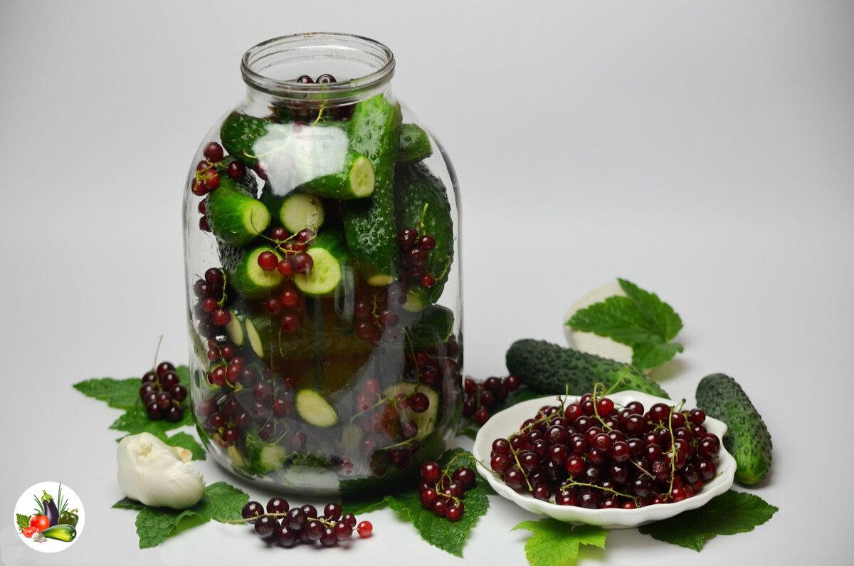 Кулинария рецепт кулинарный огурцы маринованные в красной смородине овощи фрукты ягоды