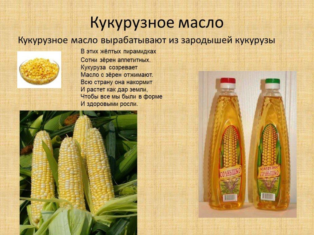 Что собой представляет кукуруза?