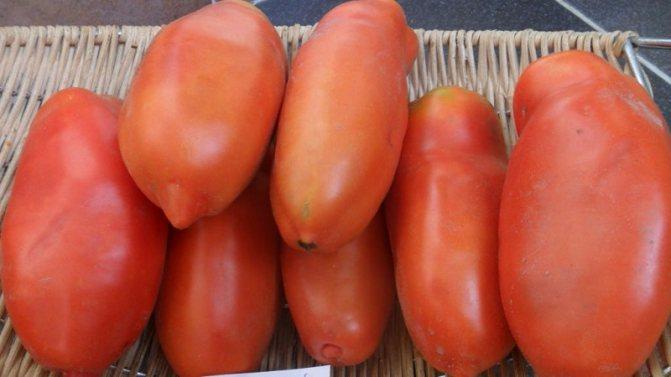 Томат садовая жемчужина: описание и характеристика сорта, отзывы, фото, урожайность | tomatland.ru