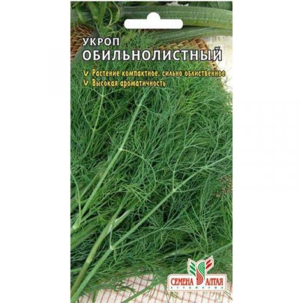 Укроп дилл: описание сорта, выращивание и урожайность с фото