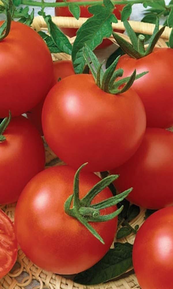 Семена томатов от коллекционеров на 2021 год