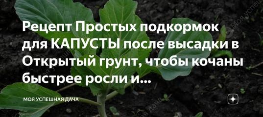 Чем подкормить рассаду капусты для роста народными средствами в домашних условиях