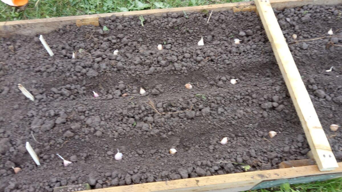 5 причин, почему я больше не сажаю картошку — ботаничка.ru