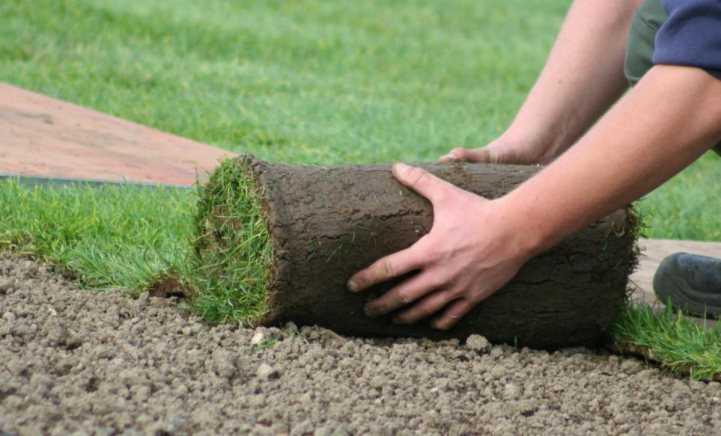 Укладка рулонного газона: устройство своими руками, технология и советы