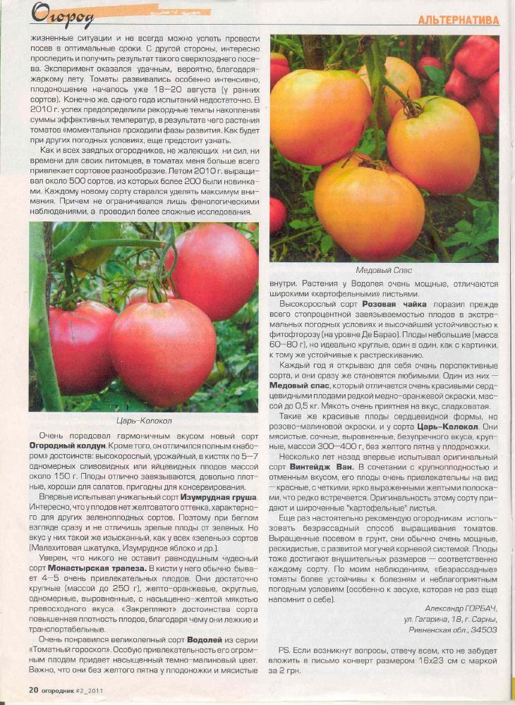 Томат огородный колдун описание сорта фото отзывы