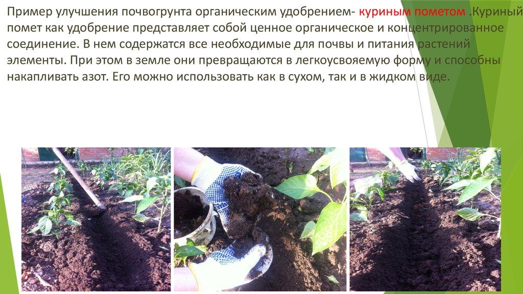 Как подкормить огурцы куриным пометом — советы опытных садоводов