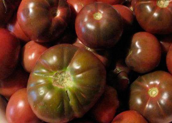 Крепкий и устойчивый сорт — томат поль робсон: полное описание помидоров и их характеристики