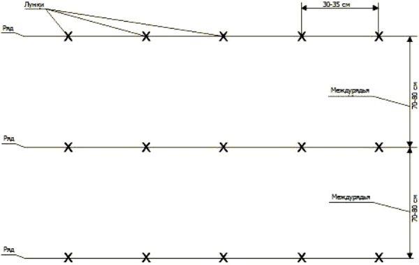 Схемы посадки картофеля – расстояния между рядами и ямками