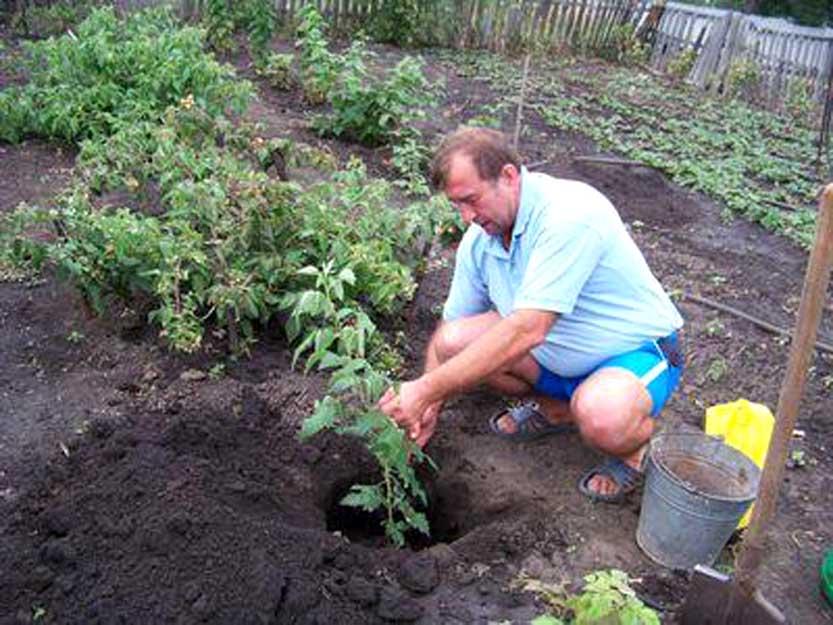 Когда и как правильно посадить персик осенью и весной: сроки, схемы, уход после