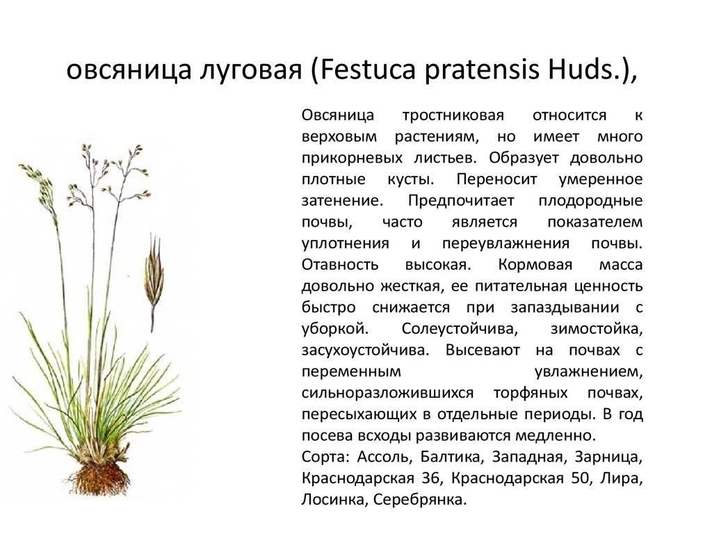 Газоны (80 фото): виды - универсальный и луговой, что это такое, какой лучше посадить, красивые декоративные зеленые газоны