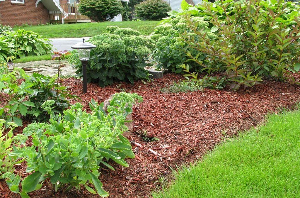 Мульчирование почвы скошенной травой: как сделать мульчу своими руками и правильно применять для томатов, огурцов, клубники и иного в теплице и открытом грунте
