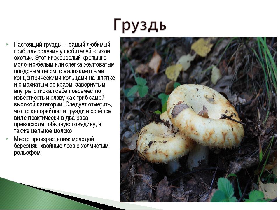 50 фото разных видов гриба белянка, ? названия, описания, как отличить