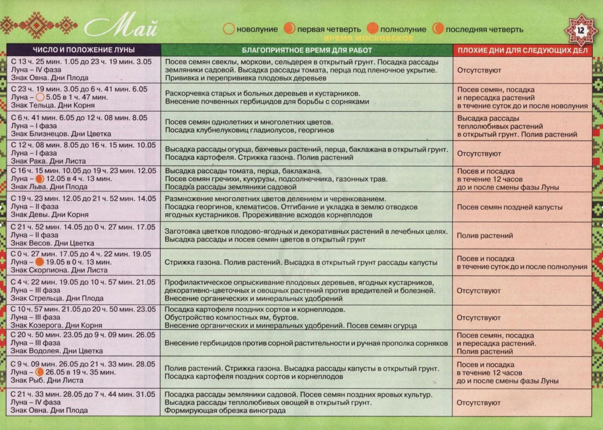 Секреты агротехники при возделывании капусты декоративной: посадка, уход