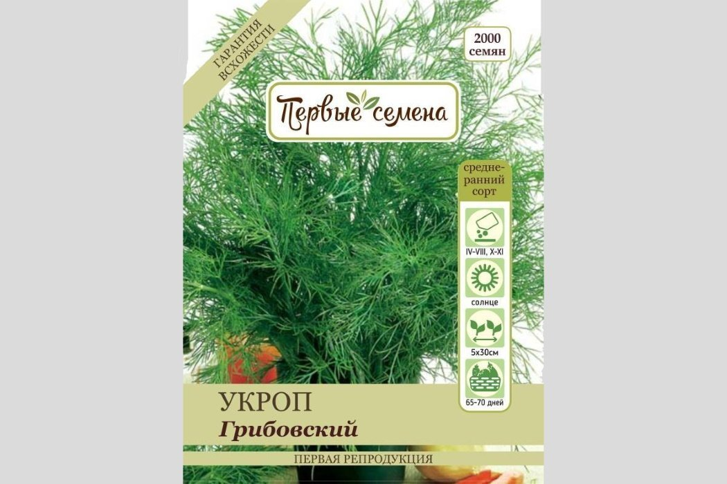 Сорта укропа, классификация по срокам созревания урожая, выбор зелени для теплиц, гидропоники и домашних условий