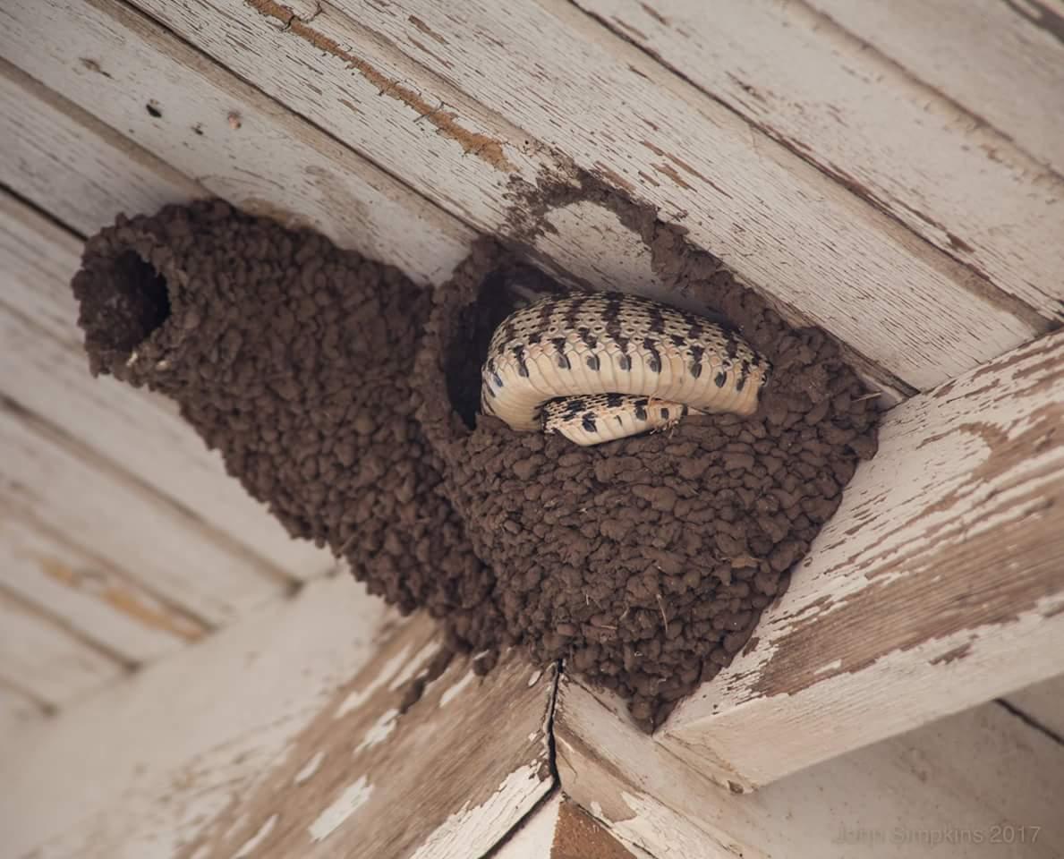 Как избавиться от пчел соседа