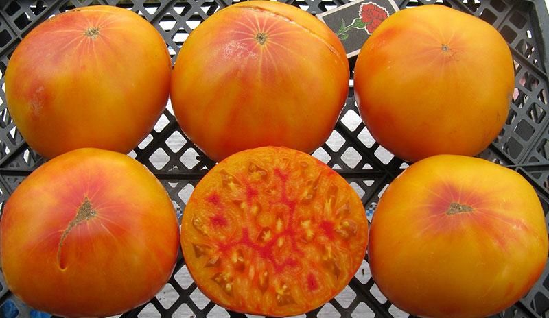 Томат черный ананас: описание сорта и особенности выращивания с фото