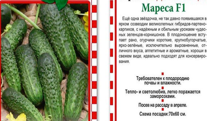 Самые урожайные огурцы для открытого грунта - обзор сортов с названиями, характеристиками и отзывами