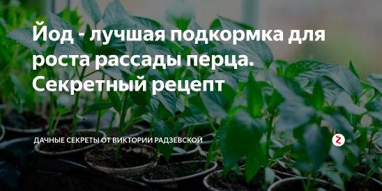Чем подкормить рассаду перца - до и после пикировки, для роста, чтобы была крепкой и толстенькой