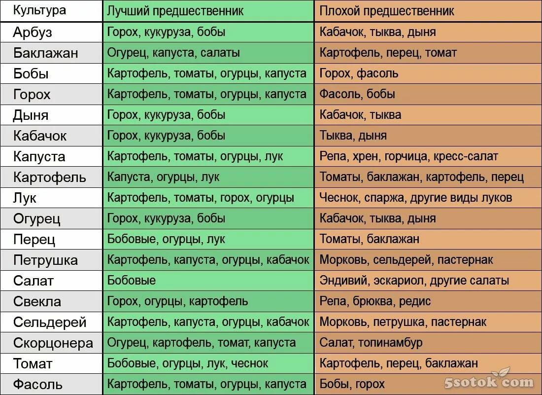 Что сажать после чеснока на следующий год: после какой культуры можно садить эту, можно ли рядом сеять другие семена, как он сочетается с другими растениями? русский фермер
