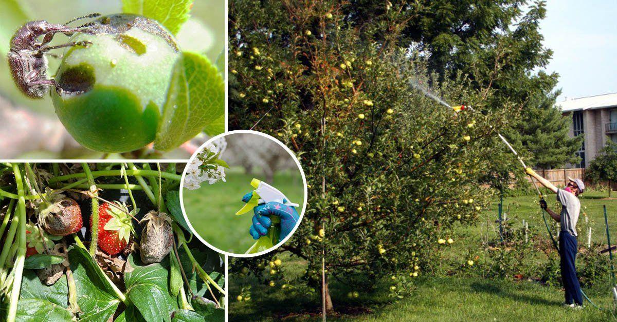 Борьба с плодожоркой: способы спасения сада