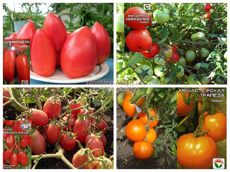 Описание лучших сортов томатов для теплицы из поликарбоната: фото, особенности сорта