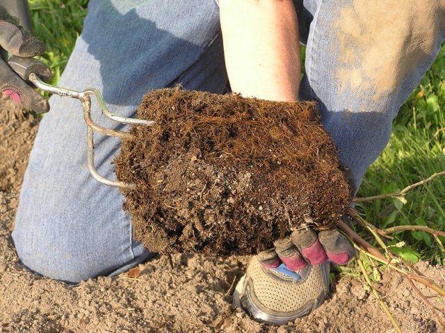 """Какая должна быть кислотность почвы для голубики? - журнал """"совхозик"""""""