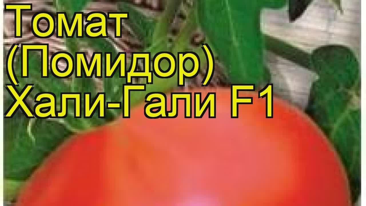 Сорт томата хали-гали f1