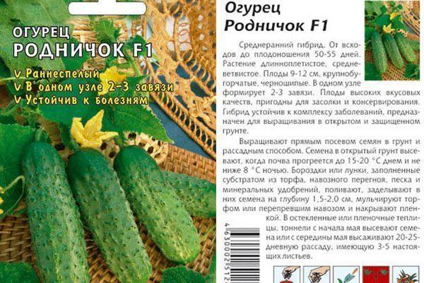Огурец «муму f1»: характеристика и урожайность гибрида