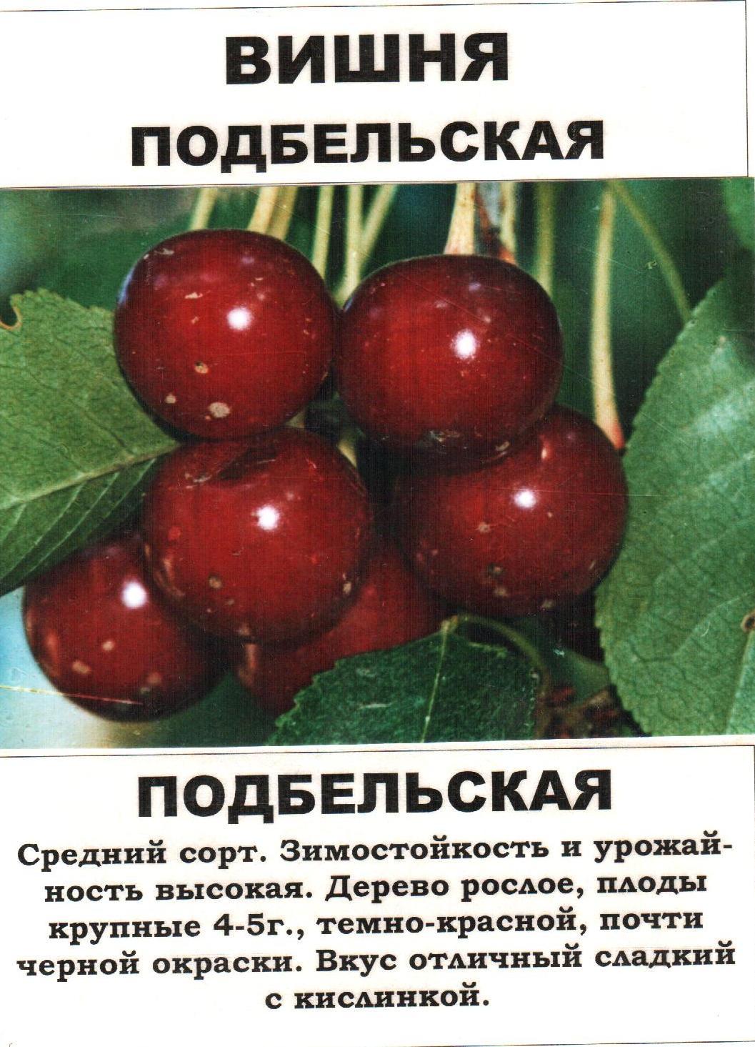 Выбираем вишню для средней полосы россии: обзор подходящих сортов