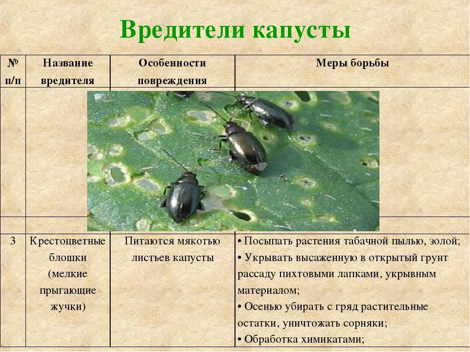 Лечение и борьба с болезнями и вредителями моркови - с фото