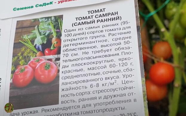 Характеристика и описание сорта томата ранняя девочка
